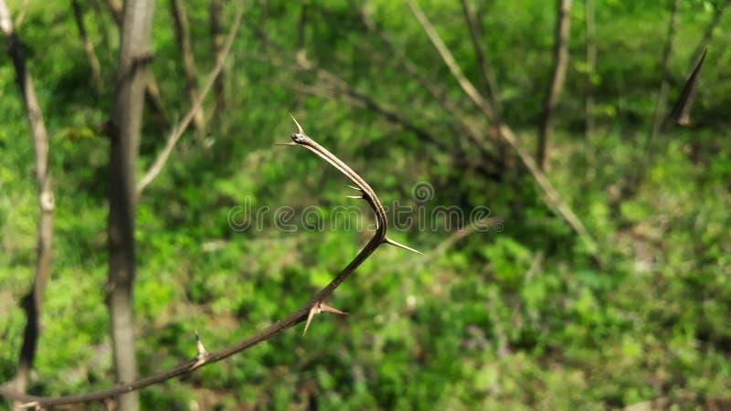迷离森林 库存照片