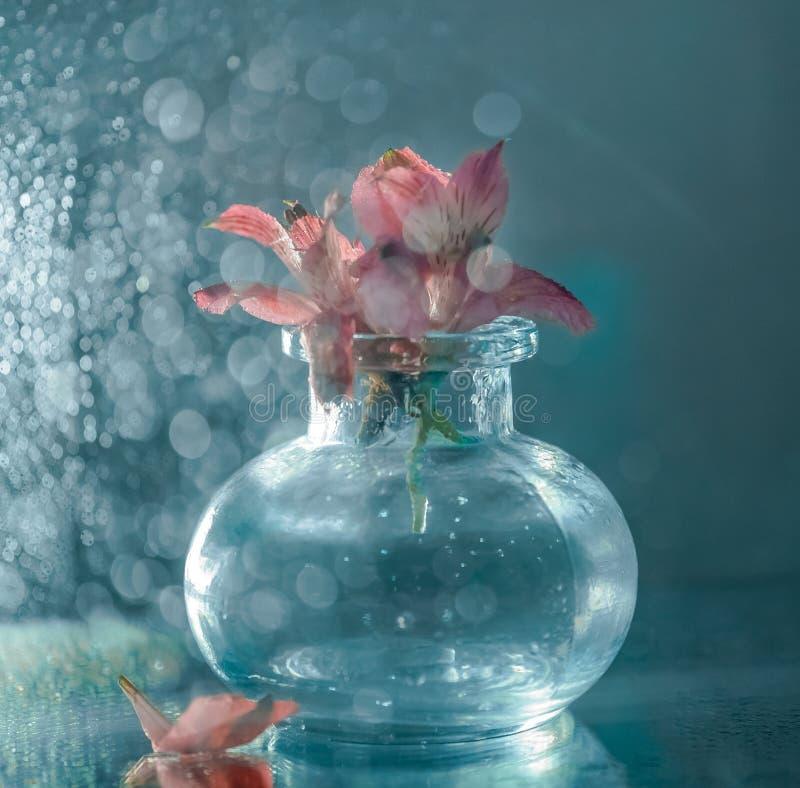 迷离玻璃花瓶桃红色花特写镜头宏观bokeh背景 免版税库存图片