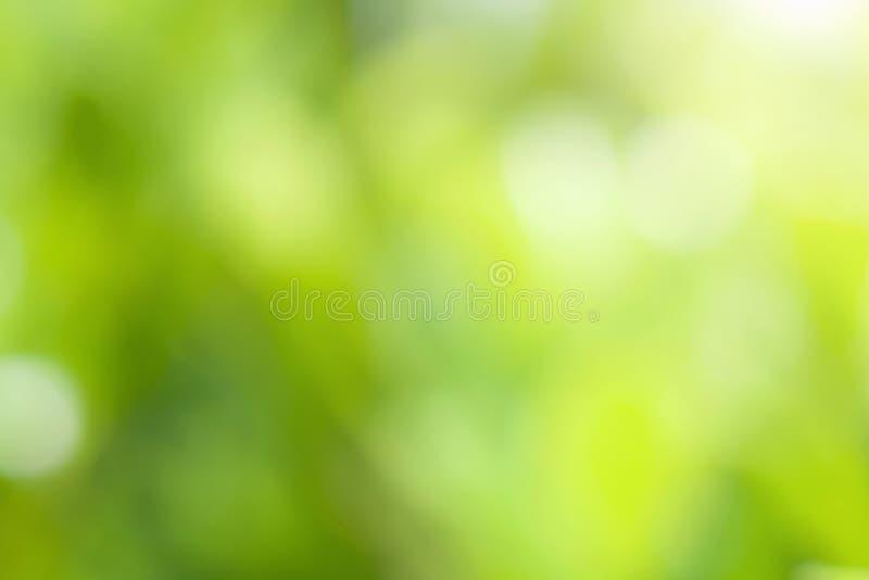 迷离绿色叶子背景 免版税库存图片