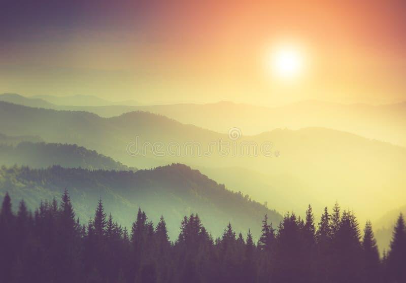 迷雾山脉小山和森林意想不到的晚上风景发光由阳光的 免版税库存图片