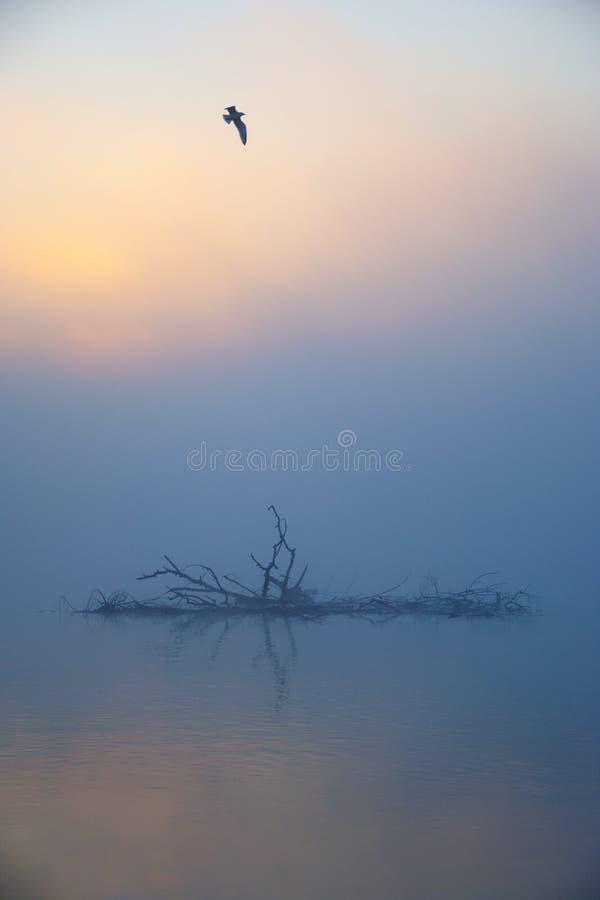 迷雾秋晨的鸟飞 免版税库存图片