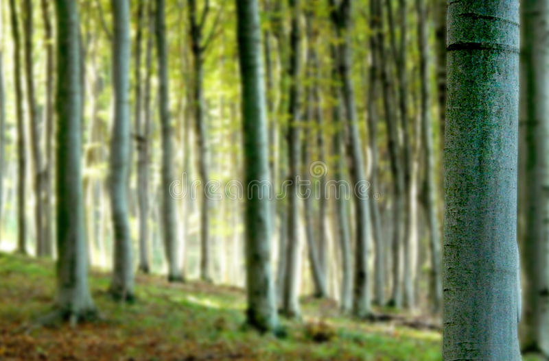 迷离森林背景 图库摄影