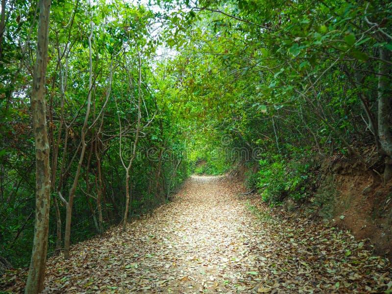 迷离森林走的足迹 免版税库存照片