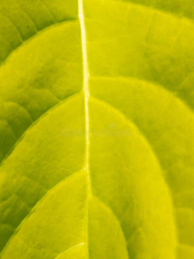 迷离绿色叶子纹理 免版税图库摄影