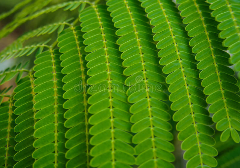 迷离绿色叶子纹理 免版税库存照片