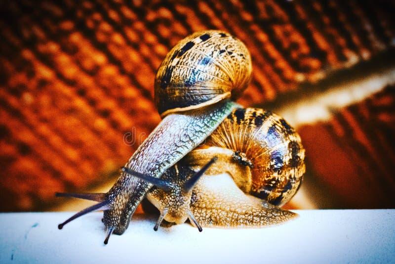 追上蜗牛 库存照片