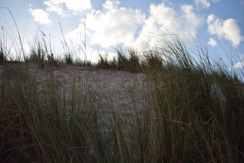 追逐风和亮光天空的草 免版税库存照片
