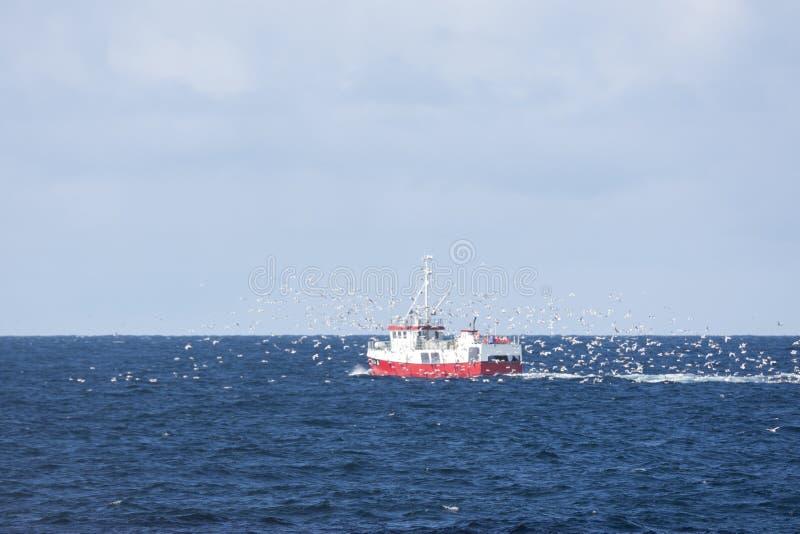 追逐鳕鱼的海鸥群拖网渔船渔在安德内斯 库存照片