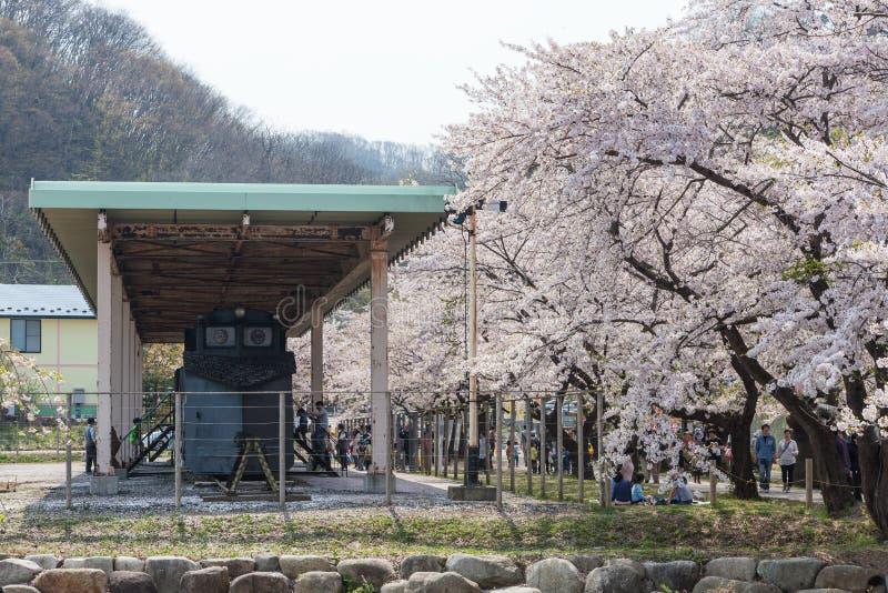 退休的雪去膜剂火车和樱花在日本 库存照片