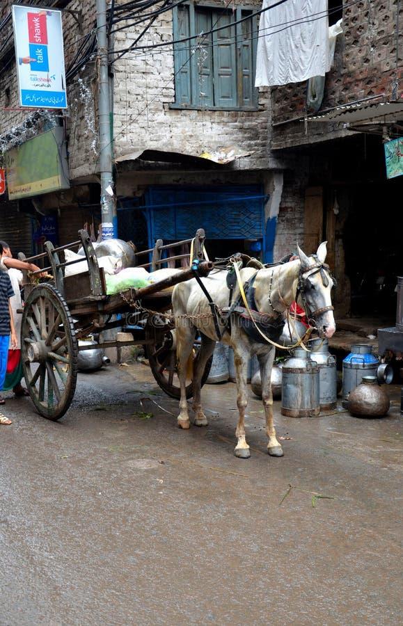 送牛奶者在被围住的城市拉合尔巴基斯坦运送在马支架的新鲜的牛奶 图库摄影