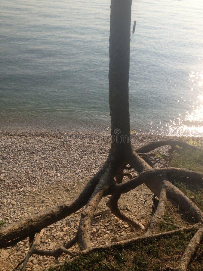 逃脱的树 免版税库存照片
