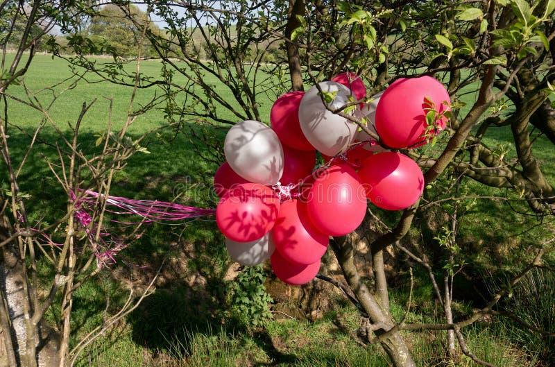 逃脱的氦气气球在树挂掉了电话 库存照片