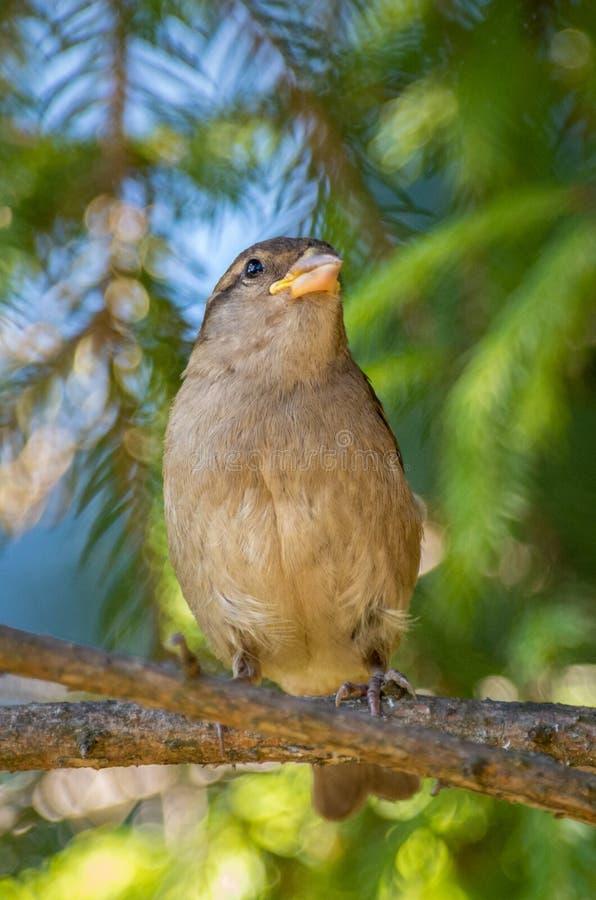 选址在树枝的小鸟 免版税库存照片