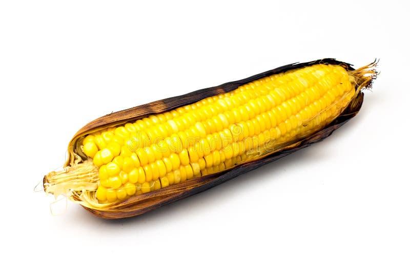 选拔一个玉米穗 免版税库存照片
