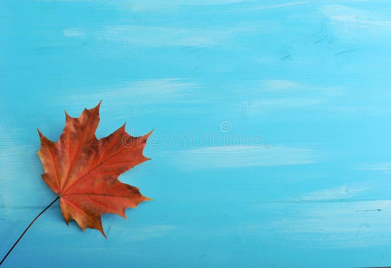 选拔在蓝色背景的红色秋天枫叶 免版税库存照片