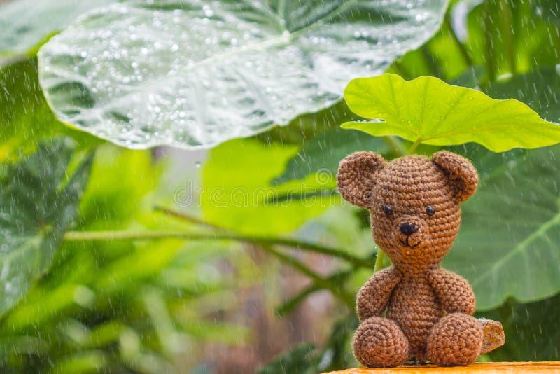 选拔熊玩偶在雨中 库存照片