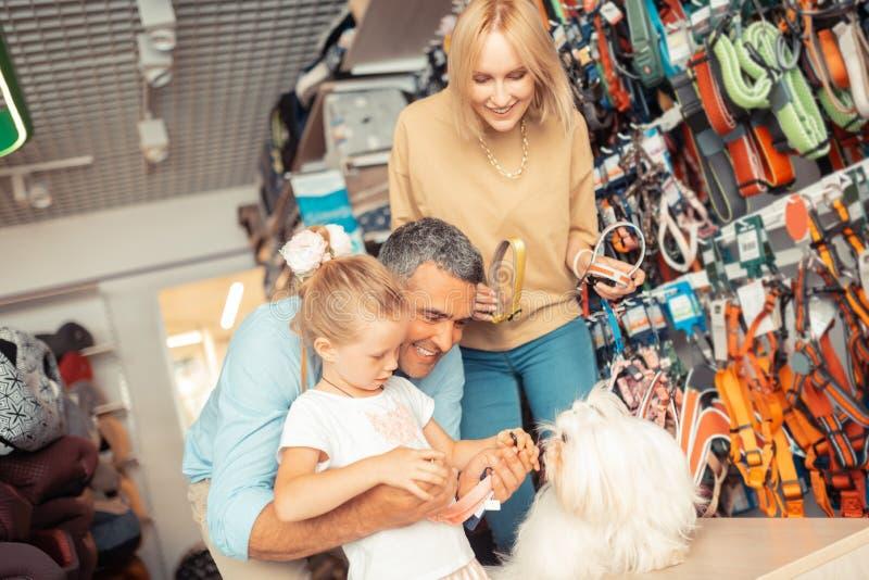 选择他们的白色蓬松狗的父母和女儿狗项圈 库存图片