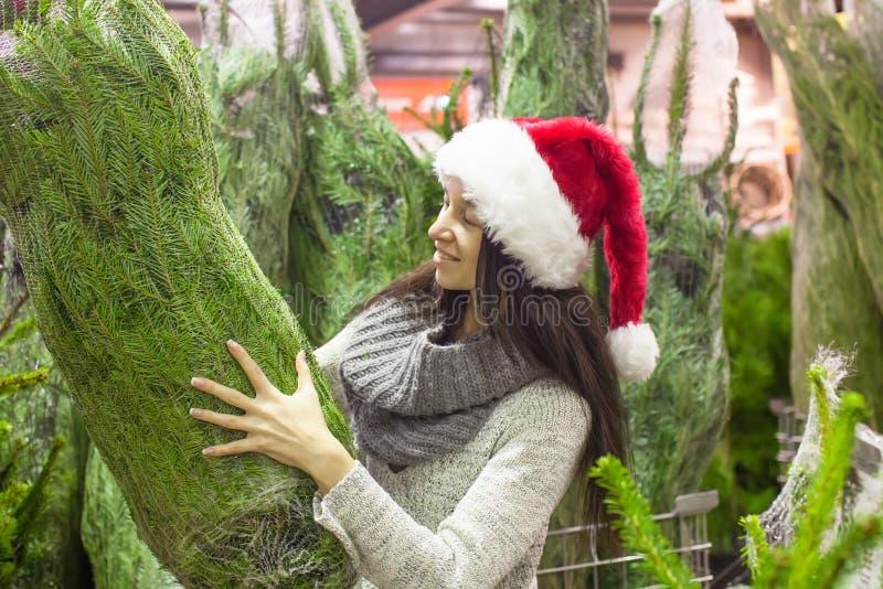 选择圣诞树的圣诞老人帽子的少妇 库存照片