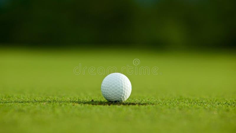 选择聚焦 在孔附近的白色高尔夫球在绿草好f 库存图片