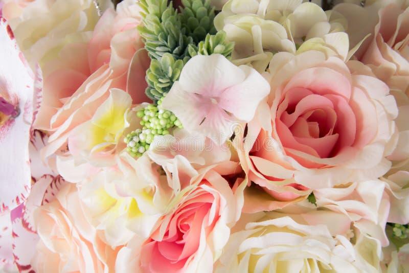 选择迷离焦点桃红色玫瑰美丽的花 图库摄影