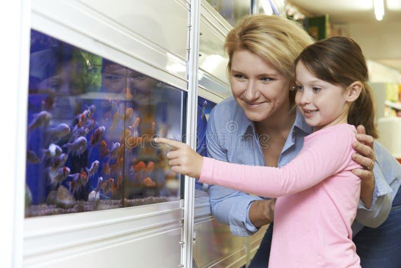 选择金鱼的母亲和女儿在宠物商店 免版税图库摄影