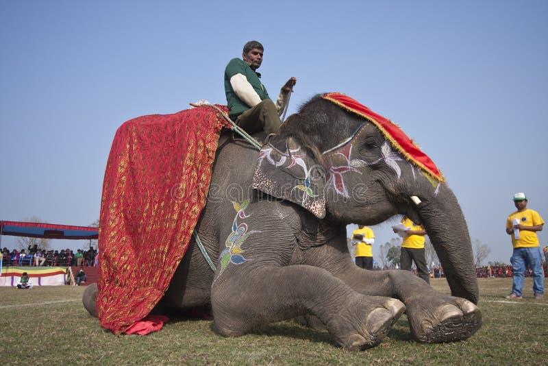 选美-大象节日, Chitwan 2013年,尼泊尔 库存图片