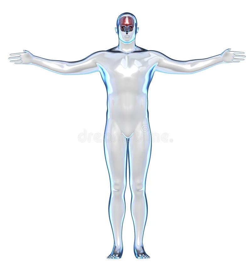 透明人体和脑子 向量例证