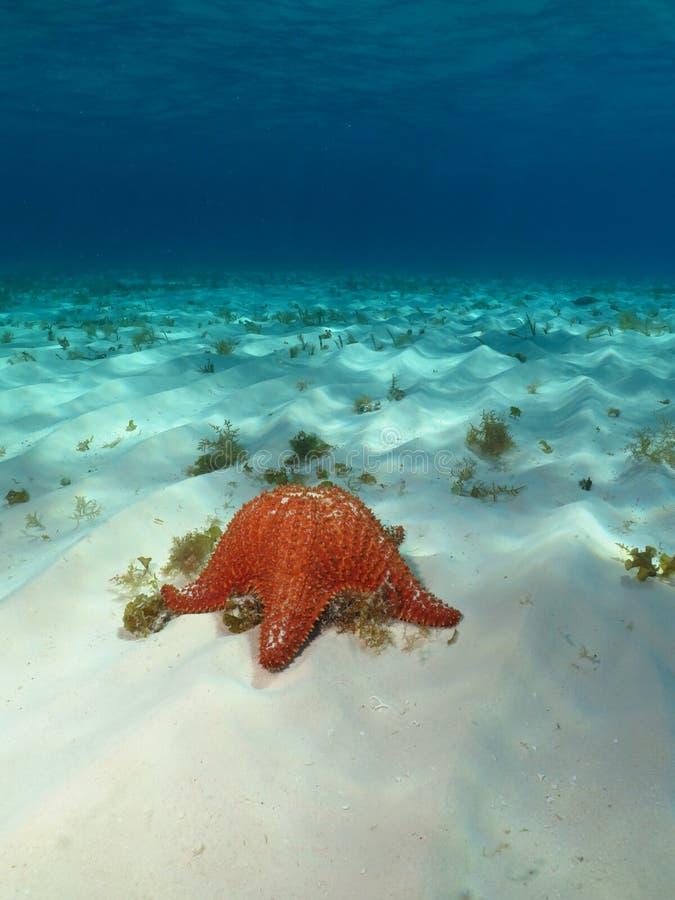 透明的水和海星愿望 免版税库存图片