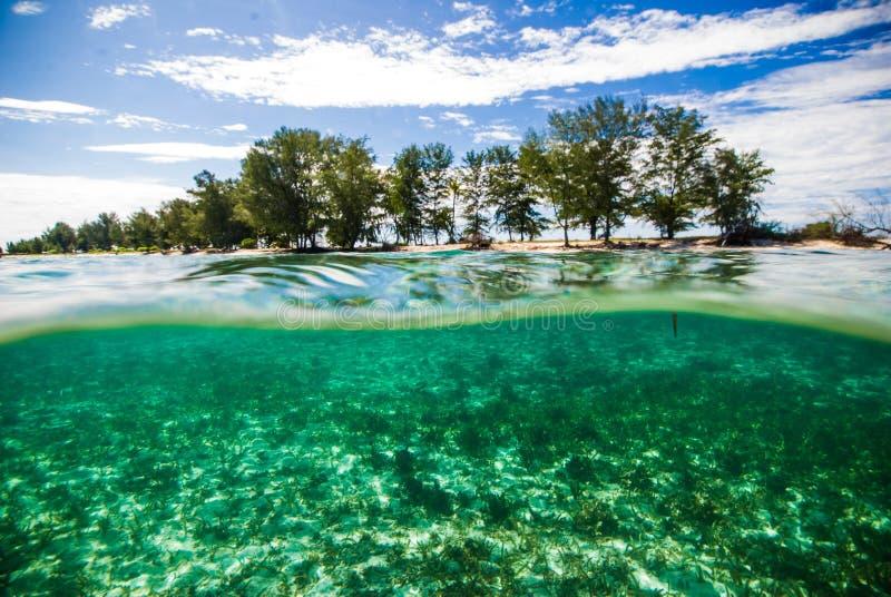 透明的水kapoposang印度尼西亚佩戴水肺的潜水潜水者 图库摄影