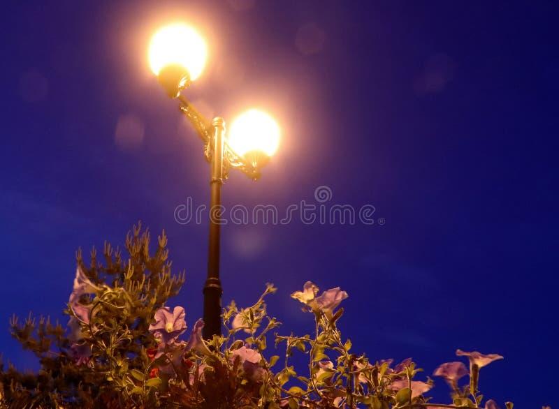 透明苹果黑色闪亮指示的晚上 反对蓝天的喇叭花 库存照片