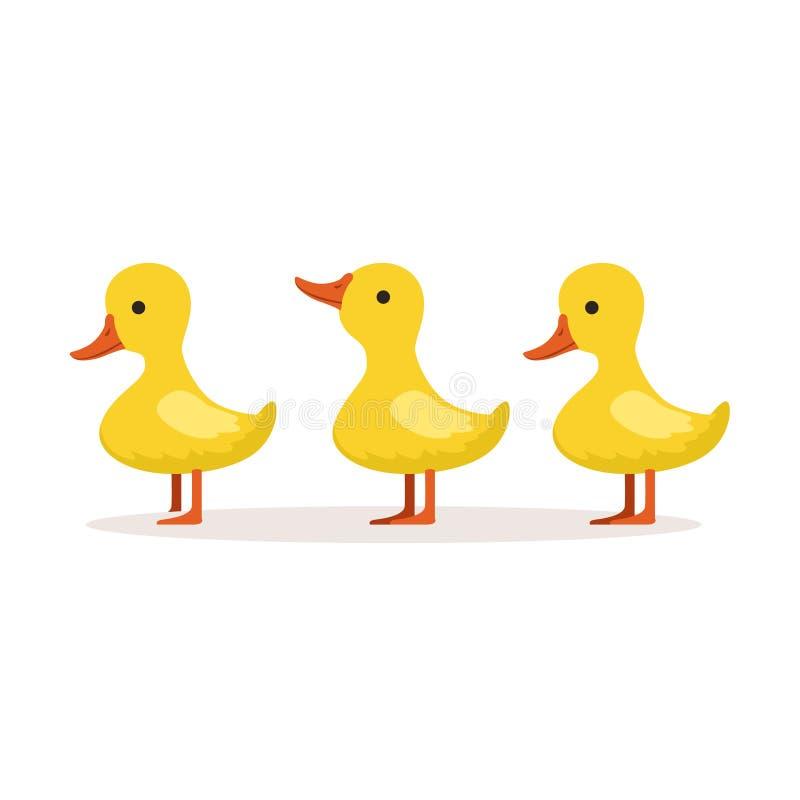 逐个站立传染媒介例证的三个逗人喜爱的动画片鸭子字符 库存例证