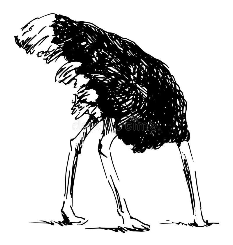 递与您的头的剪影驼鸟在沙子 皇族释放例证