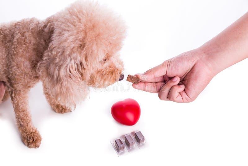 递与耐咀嚼的哺养的爱犬保护免受heartworm 免版税库存图片