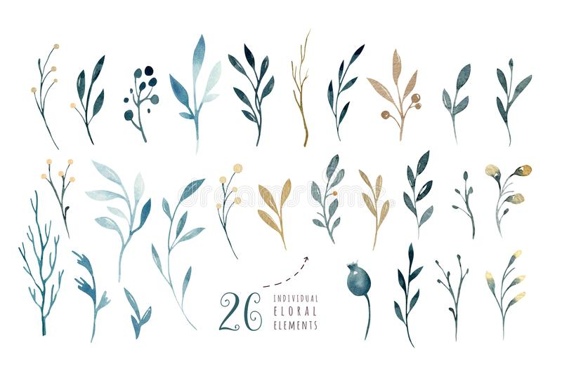 递图画被隔绝的水彩与叶子、分支和花的花卉例证 靛蓝水彩艺术 皇族释放例证