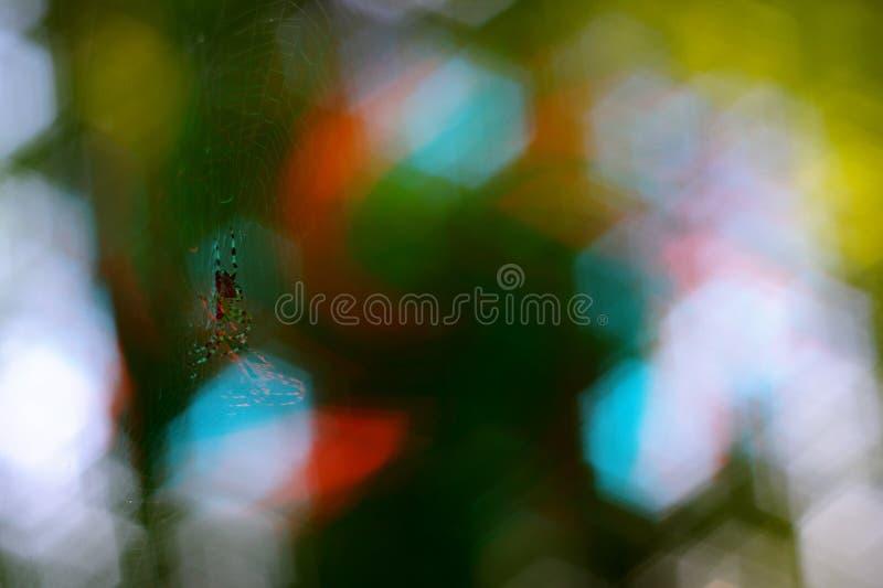 递在spiderweb的小蜘蛛 在与颜色飞溅的背景卷曲绿色bokeh 免版税图库摄影