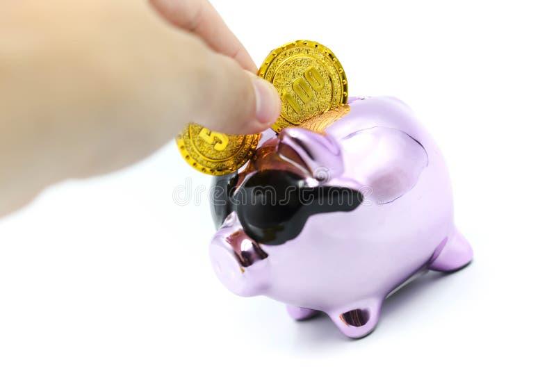 递拿着与金币的紫色存钱罐金钱 免版税库存照片