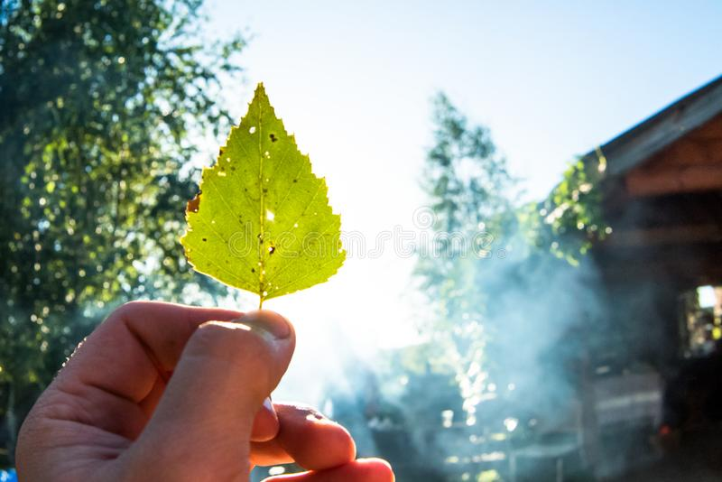 递拿着在秋天黄色晴朗的背景的黄色叶子 免版税图库摄影