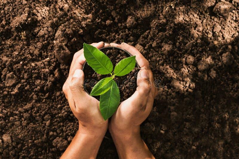 递拿着在袋子的种子树种植的 免版税库存图片