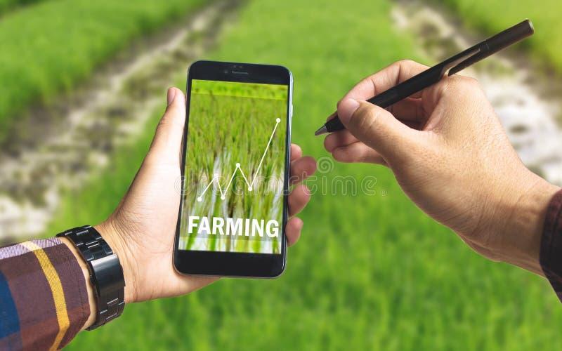递拿着巧妙的电话和电子笔与种田的文本 图库摄影