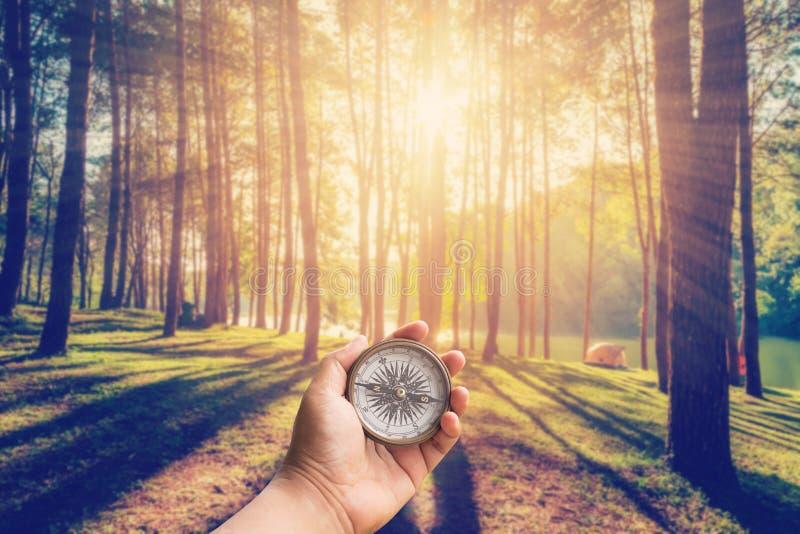 递拿着指南针的人在有阳光的落叶松属森林 库存照片