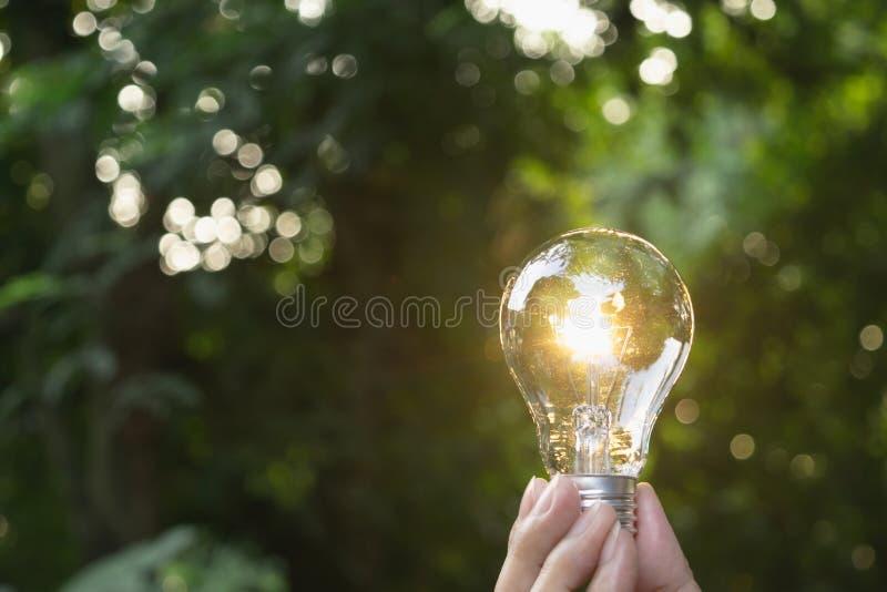 递拿着电灯泡在庭院绿色自然背景中 免版税库存图片