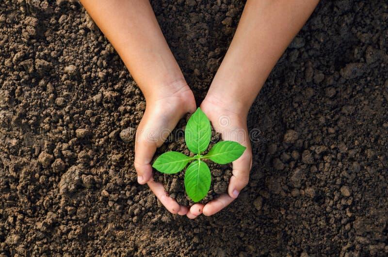 递拿着种植的年幼植物在土壤概念绿色worl 免版税库存照片