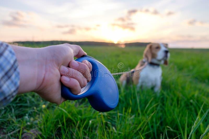 递有磁带皮带和狗小猎犬的一个人 图库摄影