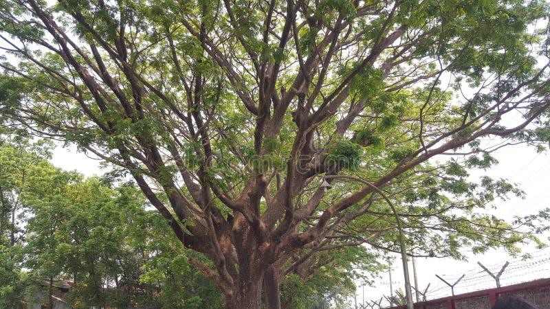 递结构树 免版税库存图片