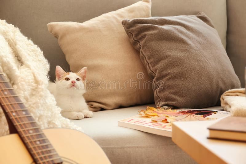 逗人喜爱在沙发的一点小猫在家 库存照片