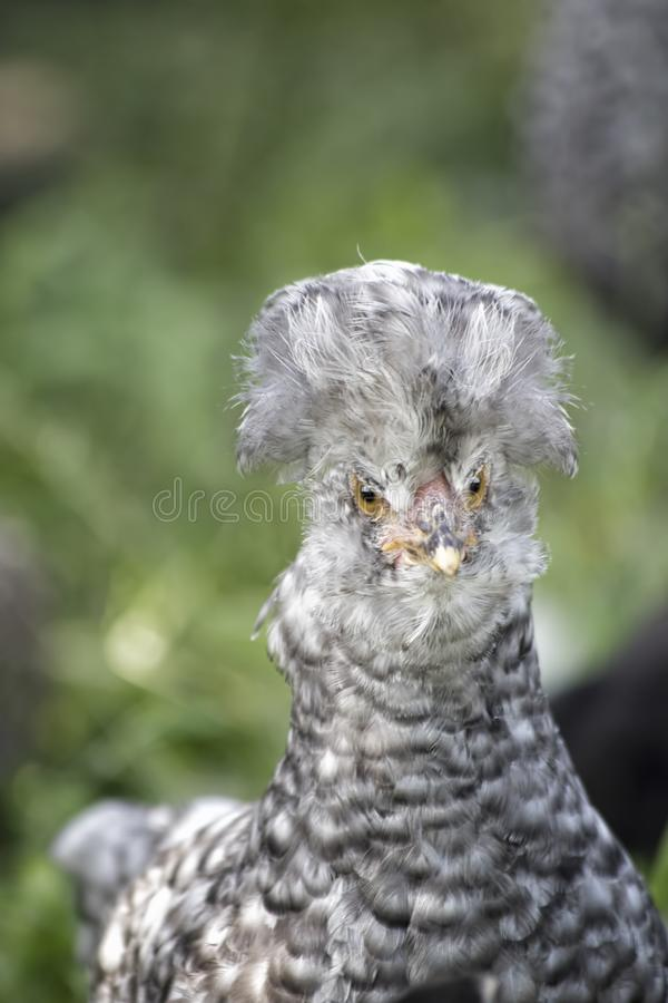 逗人喜爱在绿草的一点小鸡 免版税库存照片