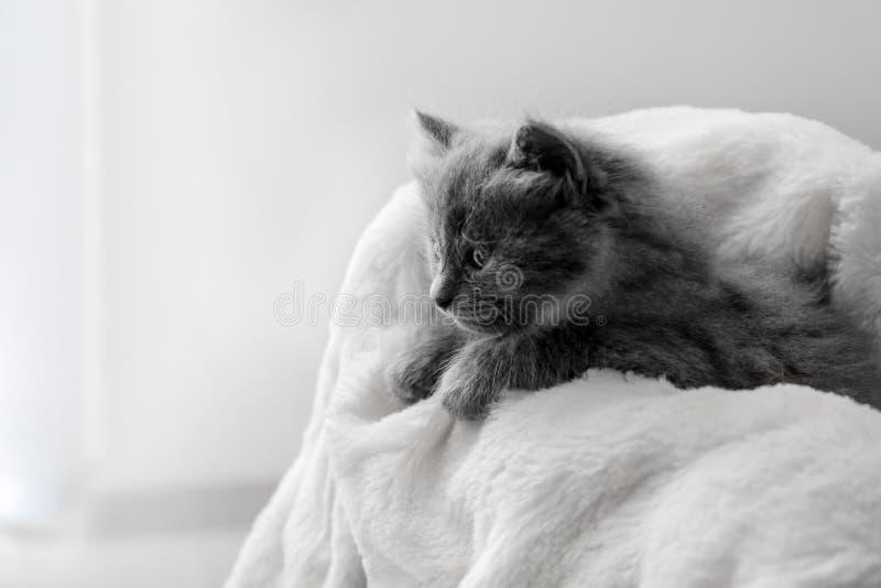 逗人喜爱在软的格子花呢披肩的一点小猫 免版税库存图片