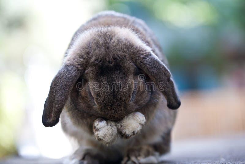 逗人喜爱婴孩的兔宝宝砍兔子 免版税库存图片
