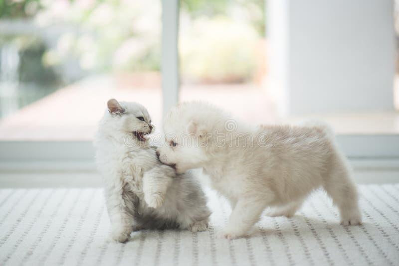 逗人喜爱小猫和小狗使用 库存图片