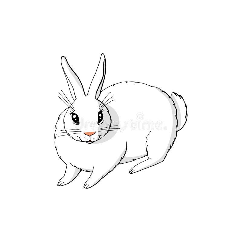 逗人喜爱滑稽动物兔宝宝坐 背景查出的白色 皇族释放例证